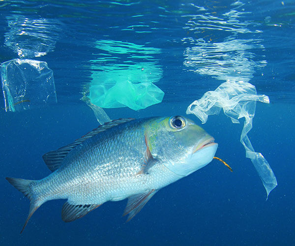 plastic straws and wildlife in the ocean